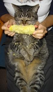 Corn-eating cat